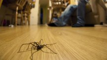 10 house spiders to watch out for in your home