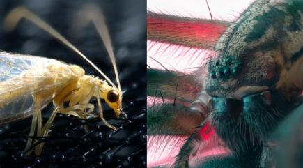10 of the bugs and insects that will be living in your house this winter