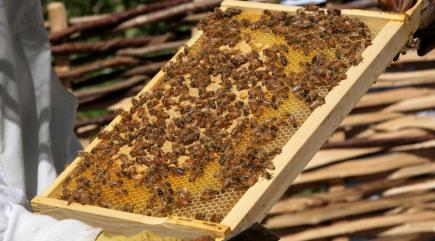12 facts you probably didn't know about honey bees