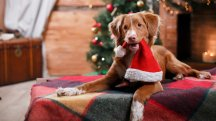 3 UK breaks to book now for a dog-friendly festive escape
