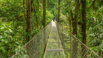 4 of the best jungle holiday destinations