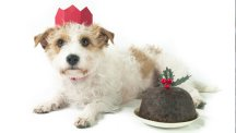5 Christmas foods that could be killing your pets