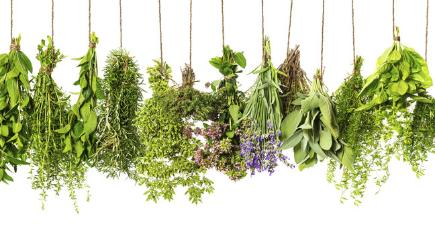 5 healing herbs you need to eat more of