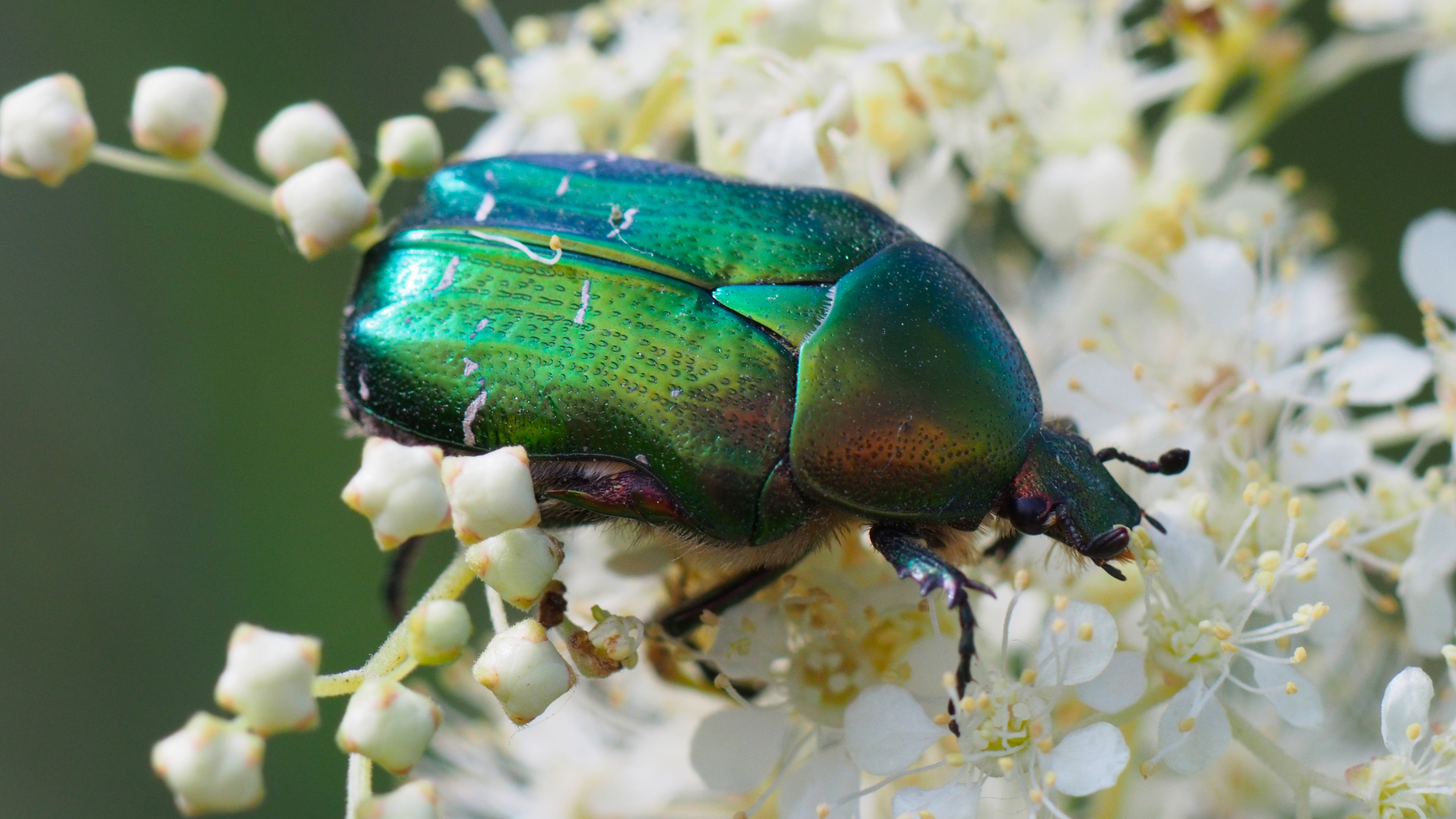 5 insects that could be good news for your garden | BT