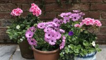 5 steps to planting last-minute patio pots this summer