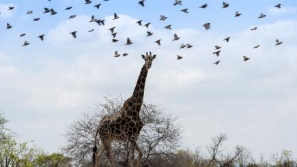 5 superb safaris to celebrate World Giraffe Day