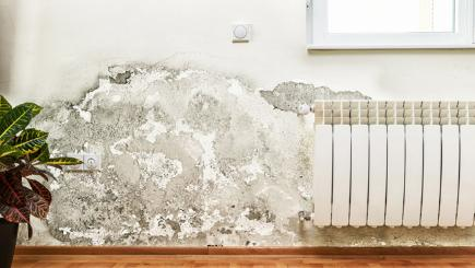 5 top tips for averting dry rot disasters