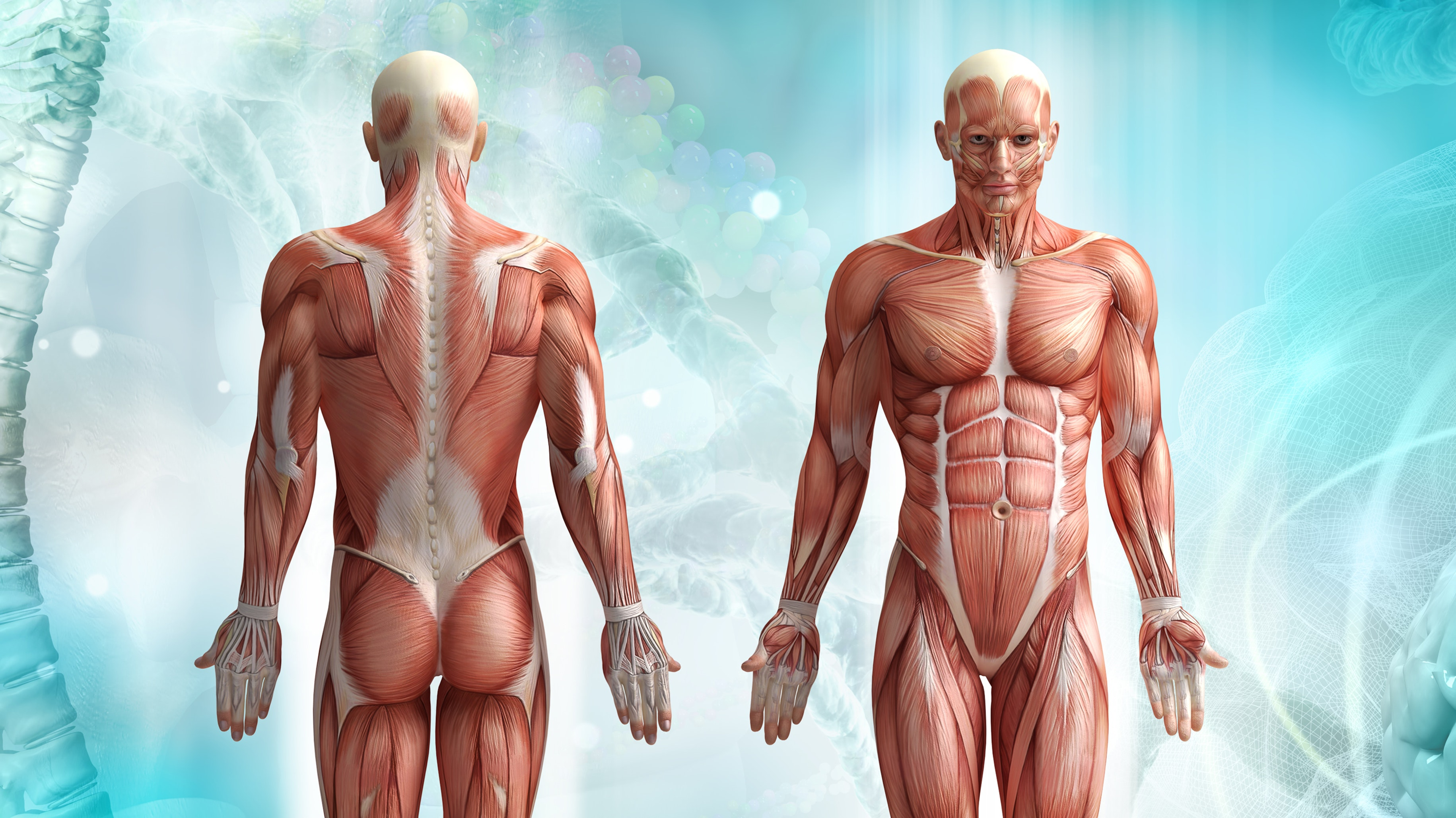 7 Myths About The Human Body That Are Often Mistaken As Facts Bt