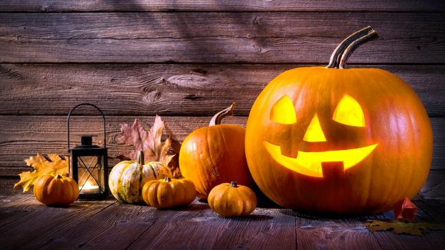7 steps to growing perfect pumpkins in time for halloween - Growing Halloween Pumpkins