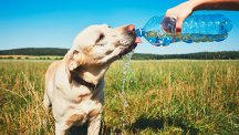 7 tips for looking after your dog in the hot weather