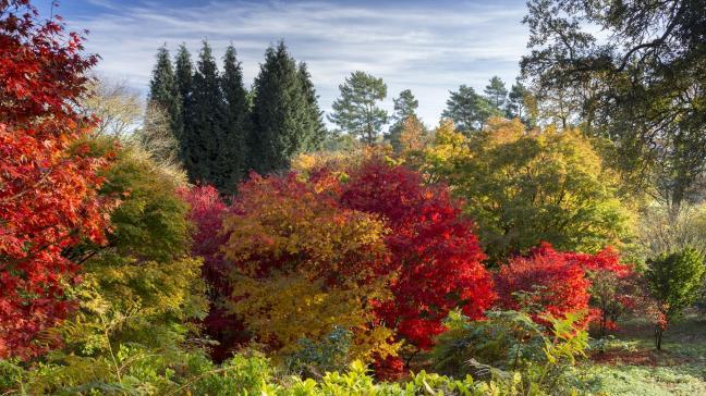 9 Of The Most Beautiful Autumn Garden Walks Around Uk Bt