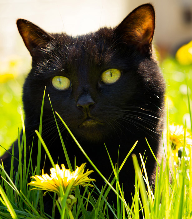 11 Ways To Get Rid Of Cats From Your Garden | BT