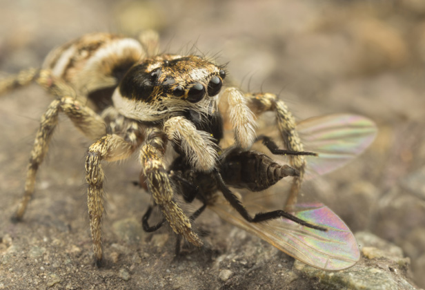 10 common spiders you're likely to find in a British home   BT