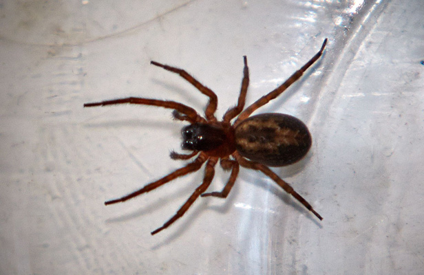 10 common spiders you're likely to find in a British home | BT