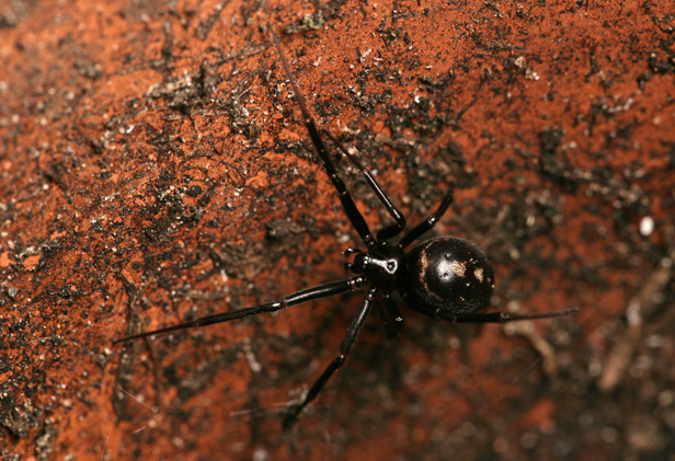 10 Common Spiders You Re Likely To Find In A British Home Bt