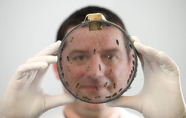 Flies in a petri dish TechniciansMakeItHappen competition