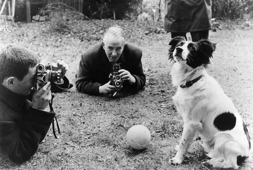 Pickles the dog who found the stolen Jules Rimet Trophy in 1966