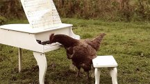 A French composer has created a unique symphony by duetting with a feathered friend.
