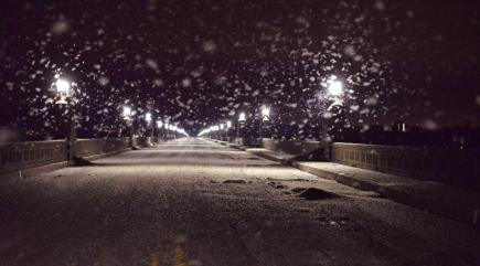 Giant swarm of mayflies 'invades' bridge