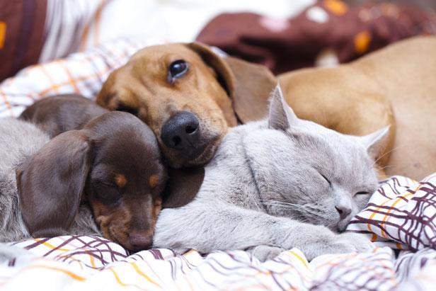 Dog Won T Sleep In Dog House Sims