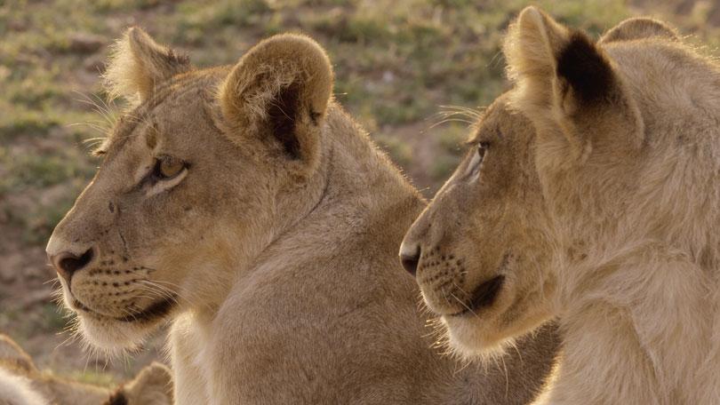 africas hunter