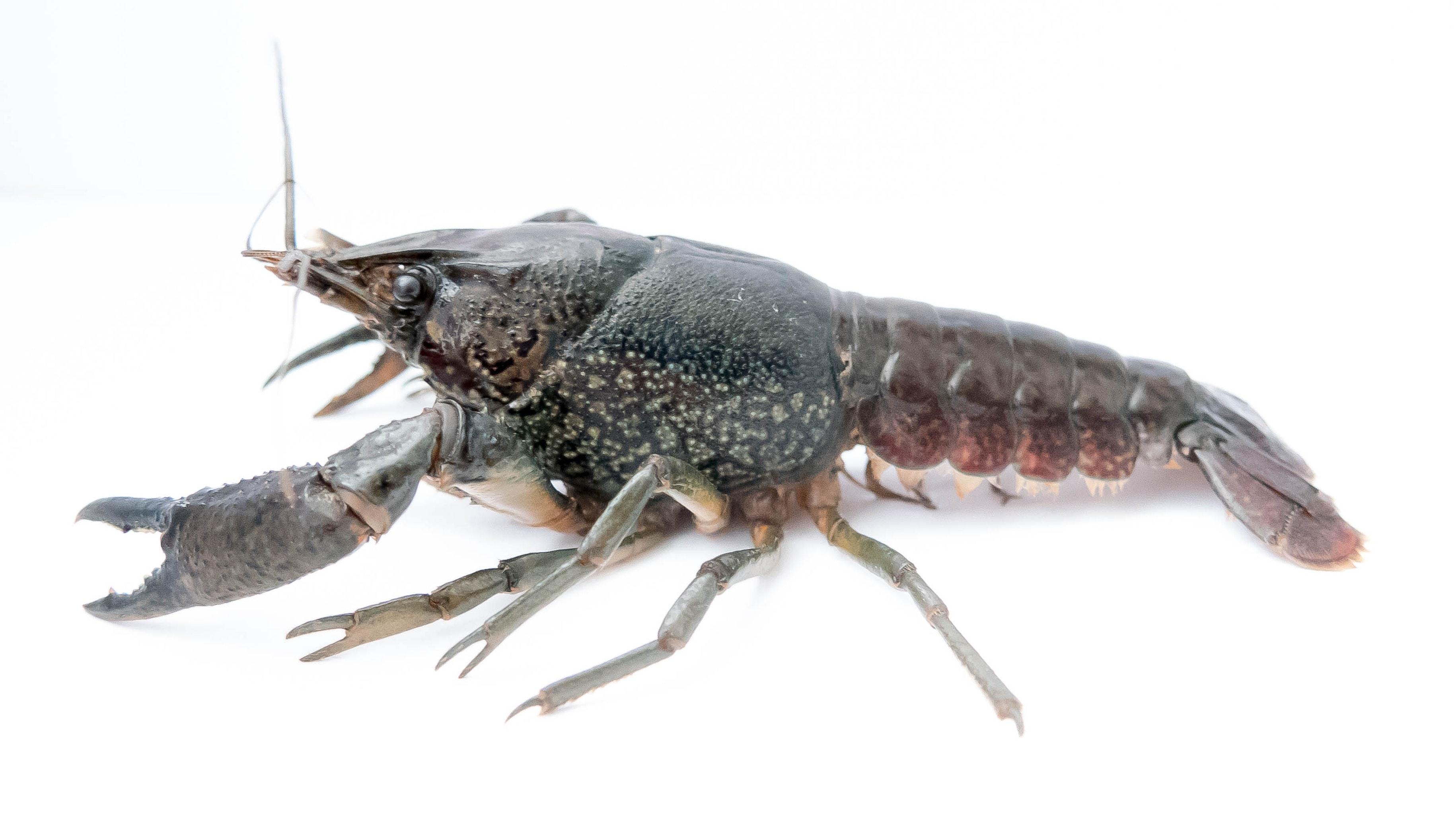 MrCrayfish / Mods