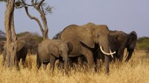 All you need to know as Donald Trump reverses ban on importing elephants killed as trophies