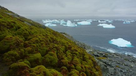 Antarctica to be 'much greener place' due to climate change, scientists find