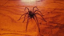Antony Cotton's photo of the spider he called Harry