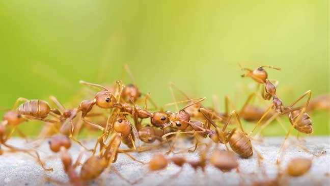 ways of the ant