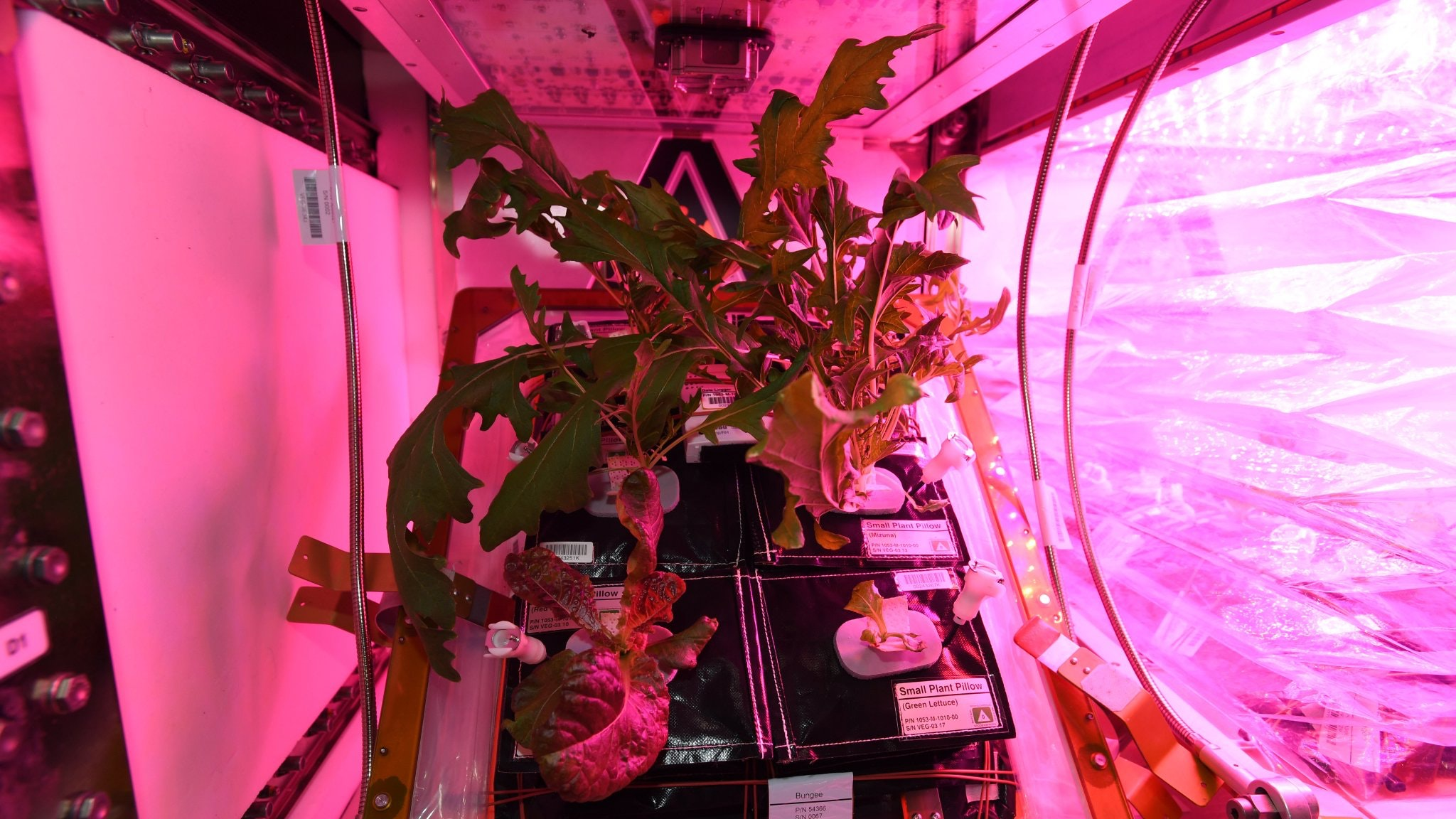 Astronauts will eat salad grown on the ISS 13