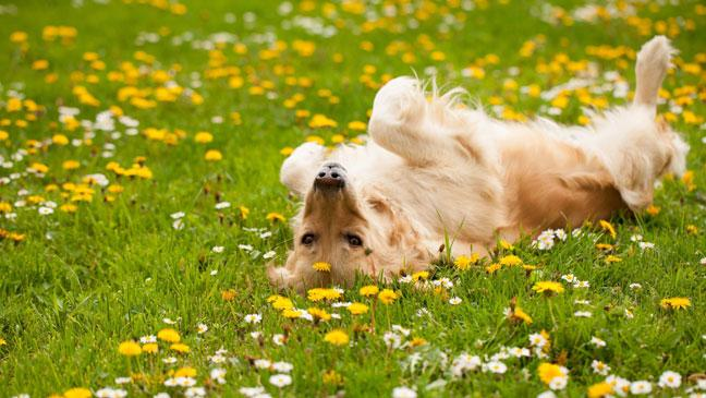 barking up the right tree how to make your garden a dog friendly