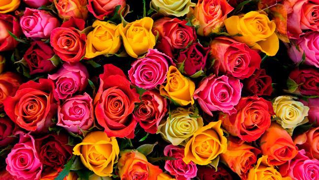 Brighten Up Your Summer Garden: 16 Flowers To Plant Now