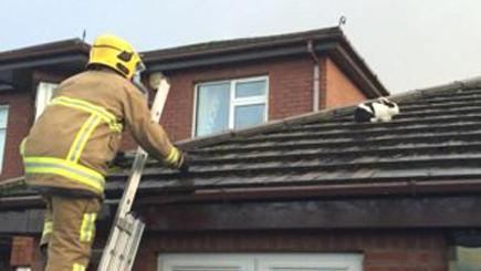 The rabbit was rescued by firefighters after Storm Gertrude blew the pet up on to a roof (Northern Ireland Fire and Rescue Service/PA)