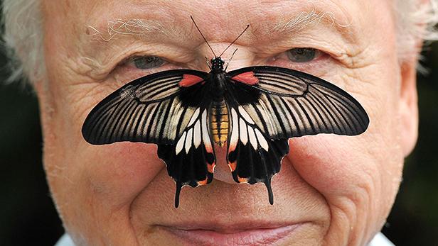 6 of David Attenborough's greatest TV moments