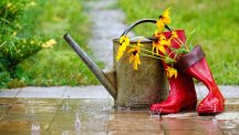 Can you save your garden after your summer holiday?