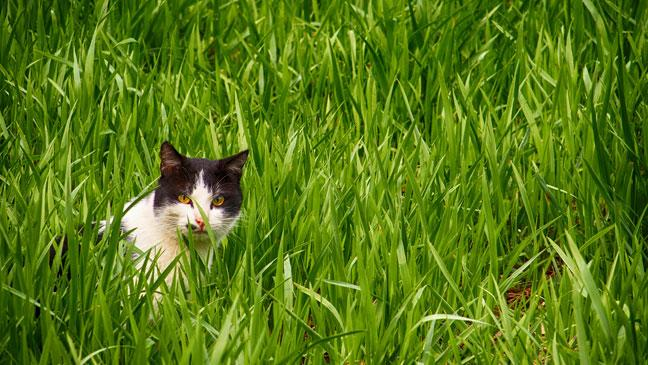 Topic des chats - Page 34 Cat-in-garden-136419874302203901-170727130747