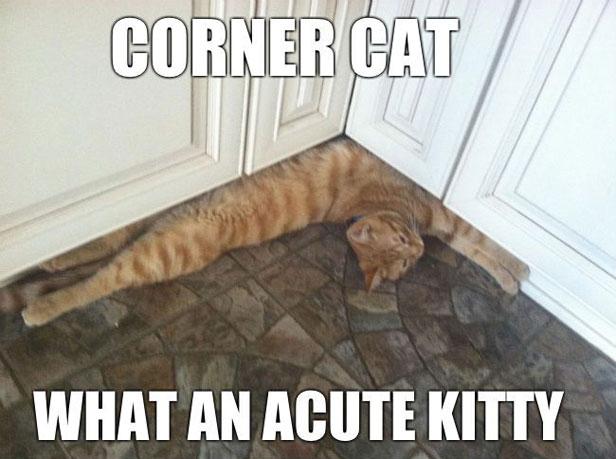 Corner Cat meme