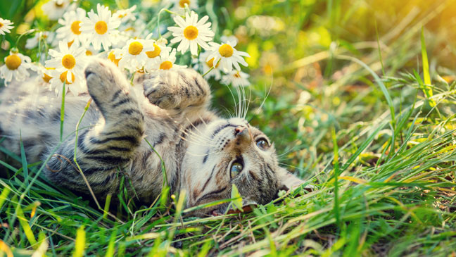 Wonderful 11 Ways To Deter Unwanted Cats From Venturing Into Your Garden