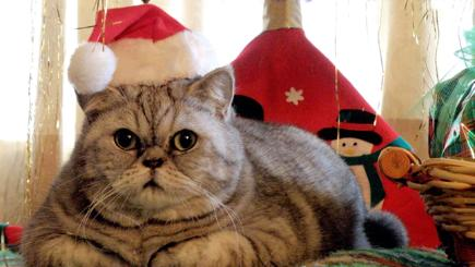 Cats who aren't looking forward to Christmas at all