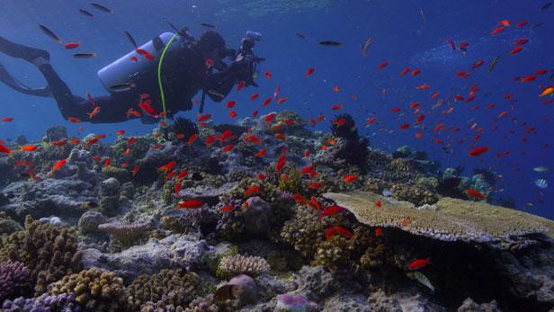 chasing-coral-netflix