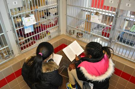 Children read stories to rescue animals