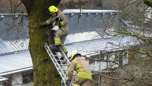 A cat being rescued from 21 feet up an oak tree in South Wales. (RSPCA/PA)