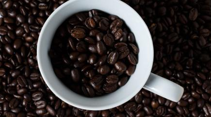 Coffee could become extinct by 2080... and climate change has a lot to do with it