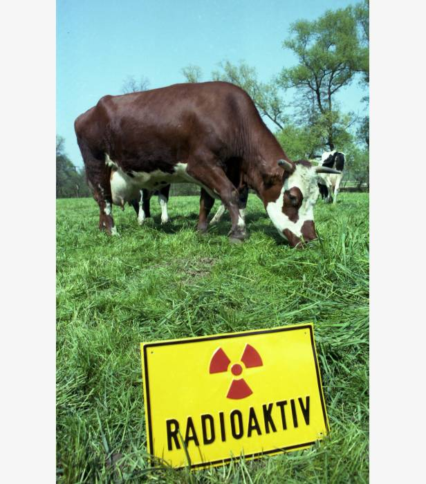 German Health autorities warned farmers to keep cattle inside after ground level radioactivity rose significantly after rain.