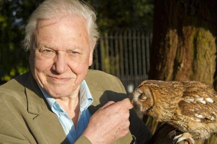 sir david attenborough eight curious facts bt. Black Bedroom Furniture Sets. Home Design Ideas