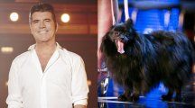 Did Simon Cowell actually get hypnotised by a DOG on Britain's Got Talent? People think otherwise