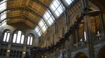 Dippy the Diplodocus is waving goodbye to the Natural History Museum
