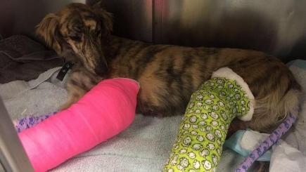 Dog thrown from moving van on to M23 breaks legs