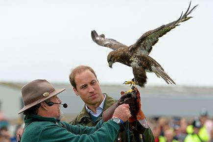 Duke of Cambridge being shown how to hold a falcon.
